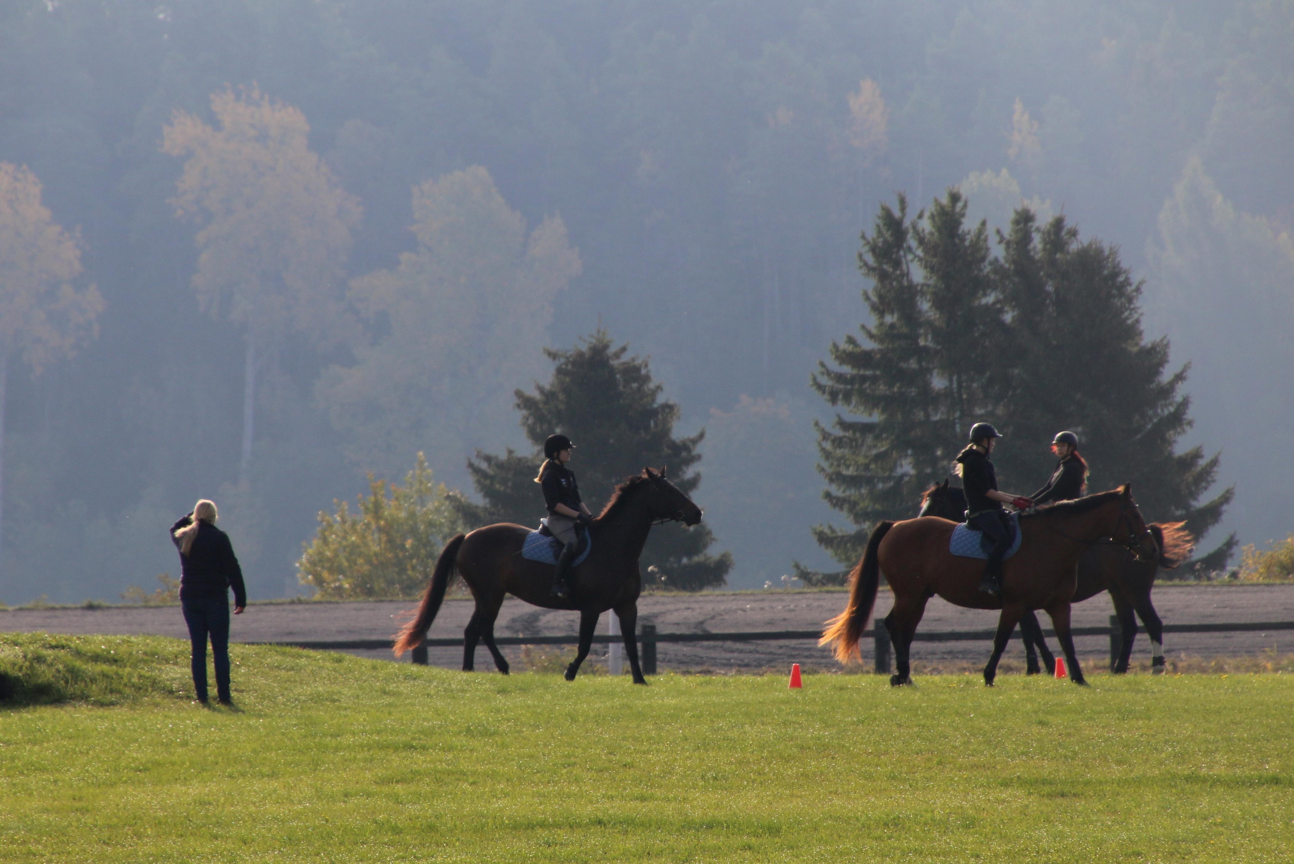 Hästar och människor som rider