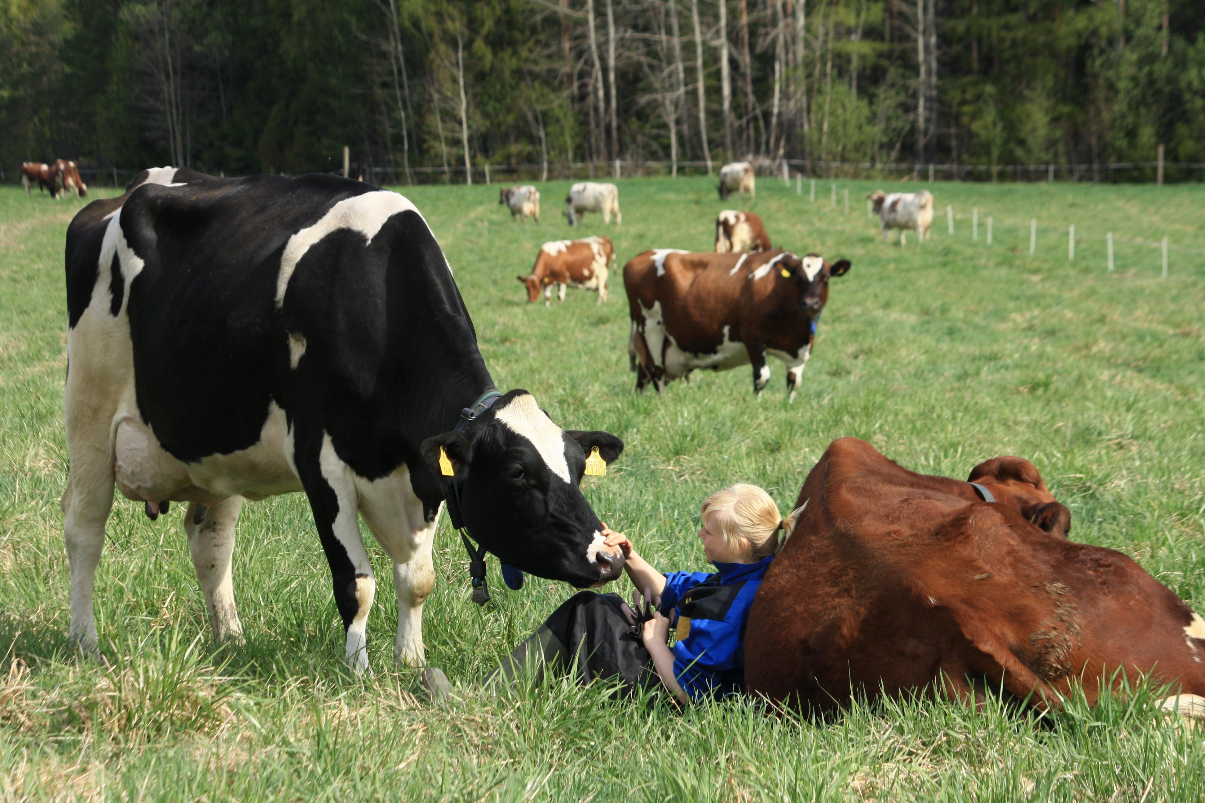 maatalous koulutus